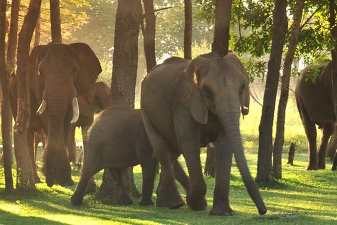 5-Day Victoria Falls and Hwange National Park Tour from Victoria Falls