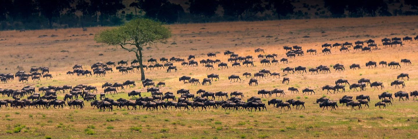 A photo of the Great Migration in North Serengeti National Park; an African National Park in Tanzania.