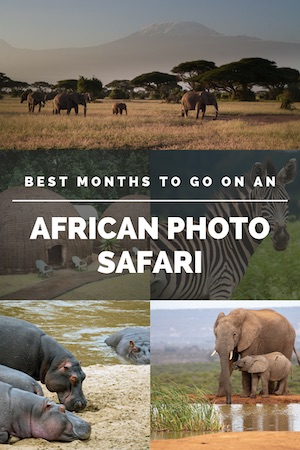 Safari is all about timing. When to go is just as important as where to go. Learn when is the best time for an African safari. #africansafari #africa #tanzania #zimbabwe #southafrica#botswana #zambia #kenya #adventure #travel #wanderlust