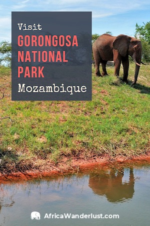 If you travel to Mozambique, do not miss out on the national park to experience the best safari attractions. You can learn more about these attractions in this travel guide. #mozambique #africatravel #africadestinations #traveltips #traveldestinations #bucketlist #adventuretravel  #travelguide #solotravel #solofemaletravel #solotraveltips