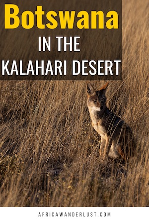 The Kalahari Desert. Covers much of Botswana and parts of Namibia and South Africa. Africa. If you are visiting South Africa, you may want to go to the Kalahari. We cover interesting facts, the best national parks, and tourist attractions, accommodation/the best place to stay, animals and plants you expect to see and more. #african #africansafari #africasafari #southafrica #namibia #botswana #southernafrica #desert #sanddunes #africatravel #africadestinations #travelideas #travelguide