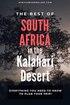 If you are visiting South Africa, you may want to go to the Kalahari. We cover interesting facts, the best national parks, and tourist attractions, accommodation/the best place to stay, animals and plants you expect to see and more. #african #africansafari #africasafari #southafrica #namibia #botswana #southernafrica #desert #sanddunes #africatravel #africadestinations #traveltips #travelideas #traveldestinations #oceanicdestinations #bucketlist #adventuretravel #travelguide #travelhacks
