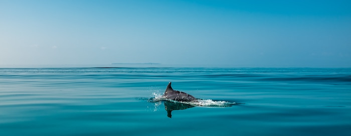 On our way to Bazaruto Island in Mozambique we were surrounded by dolphins