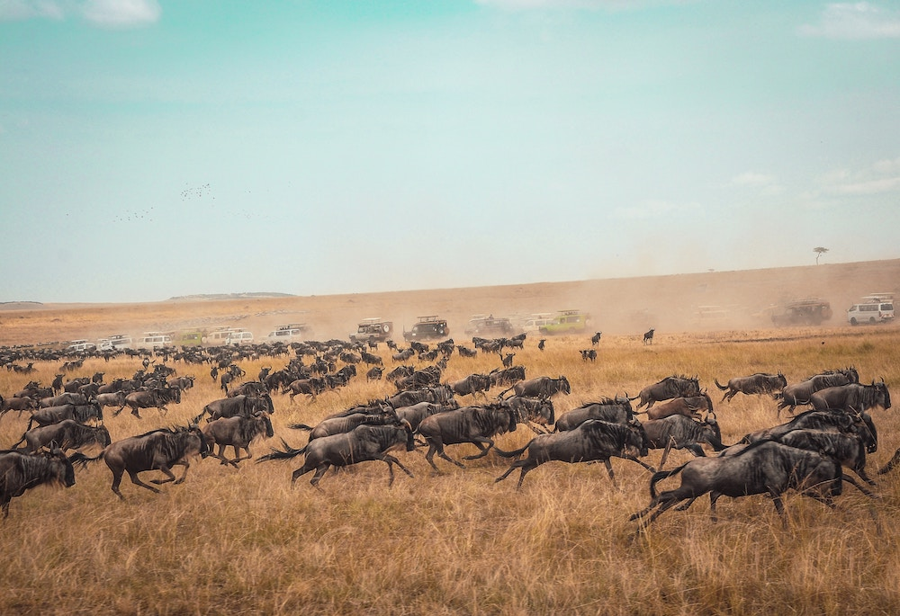 The Great Migration Masai Mara National Park and National Reserve