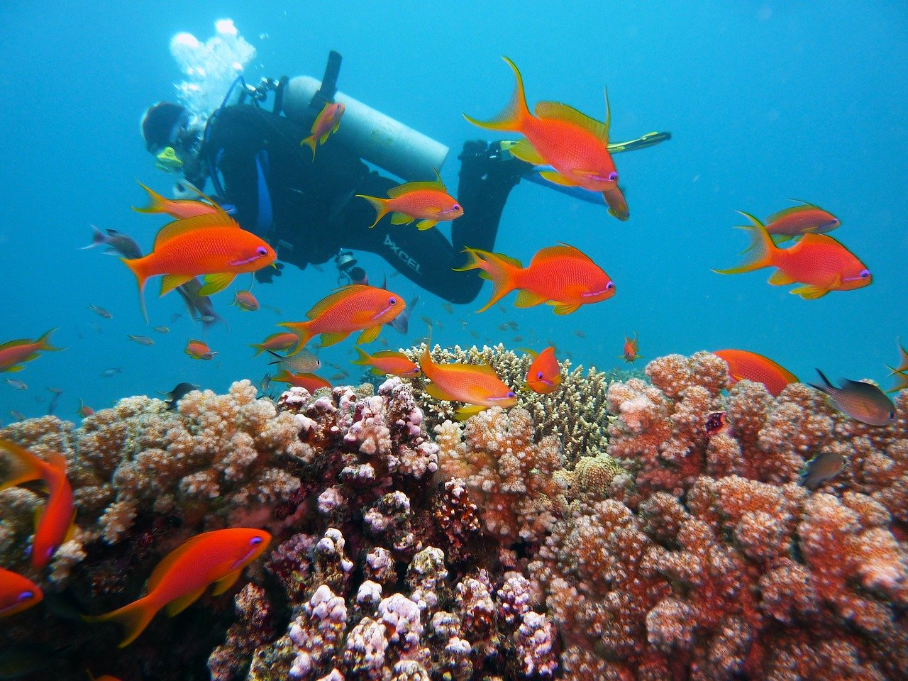 Diving at the Islands of Mozambique