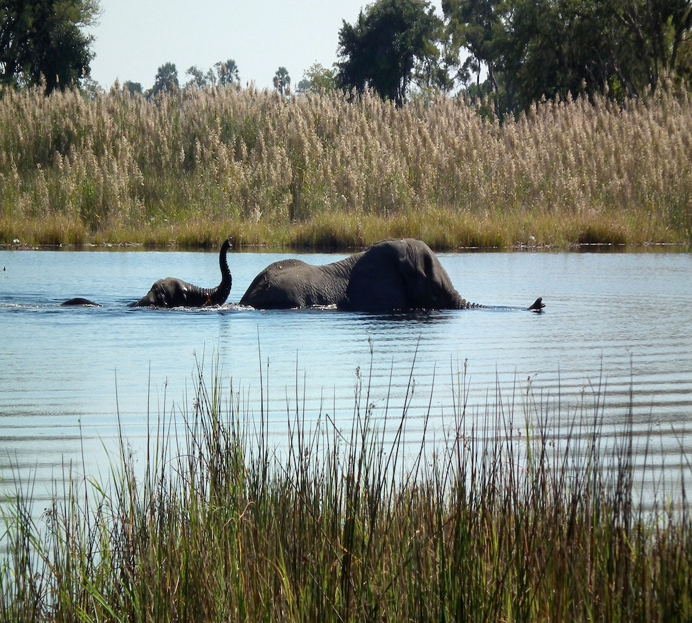 luxury african safari tours okavango delta
