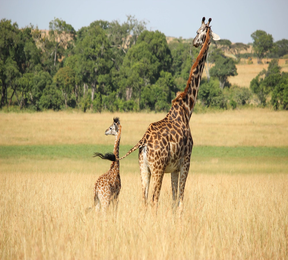 luxury african safari tours masai mara reserve