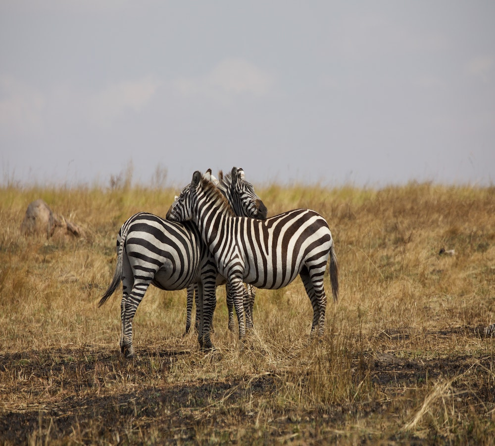 Luxury african safari tours serengeti