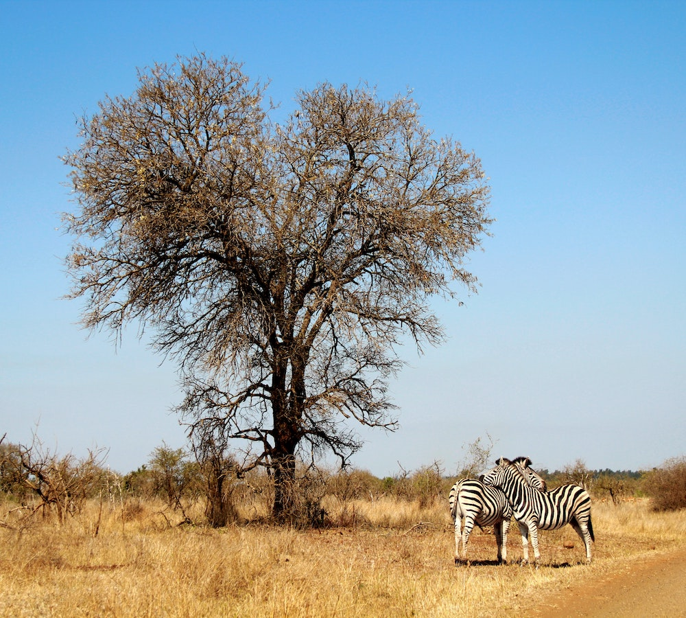 tourist attractions in south africa wildlife